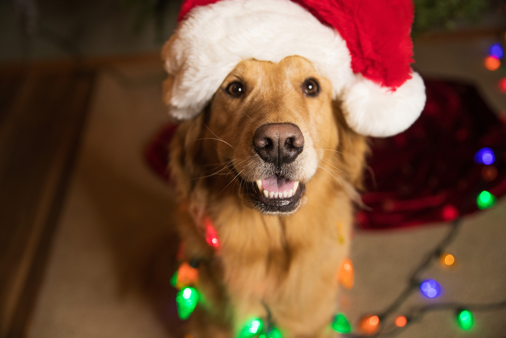 A PAW-sitively Happy Holiday - blog post image